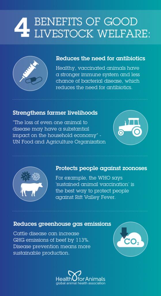 4 Benefits of Good Livestock Welfare