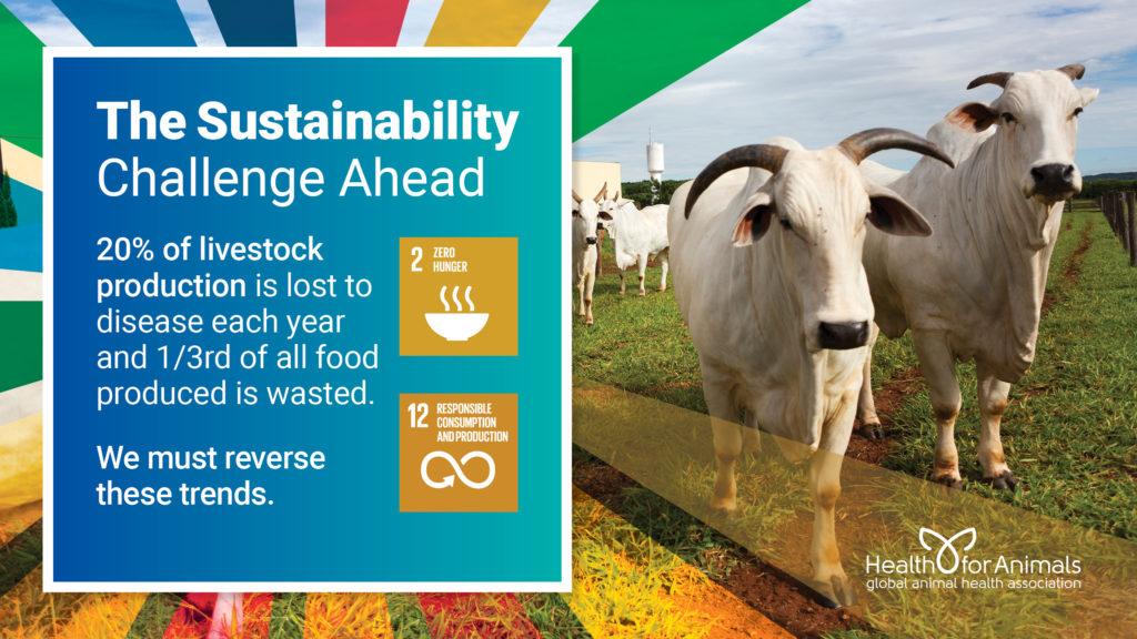 Challenge Ahead – Livestock losses