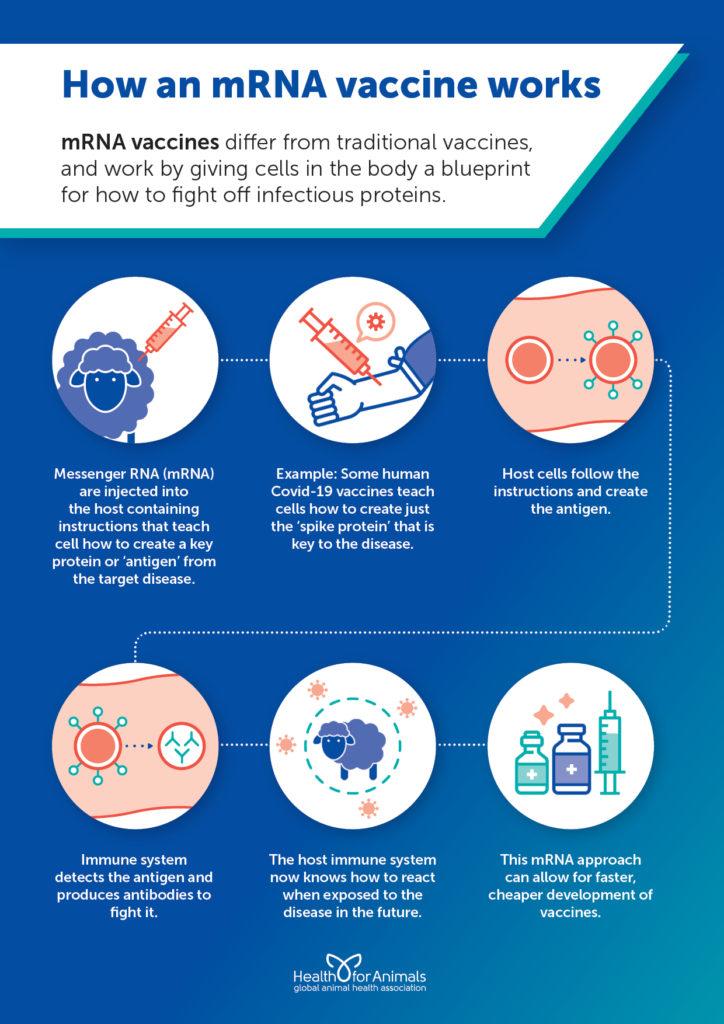How an mRNA vaccine works