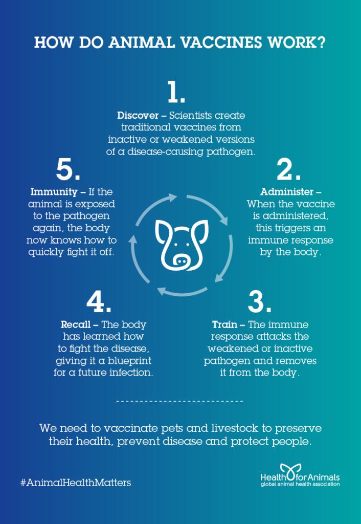 How do Vaccines Work