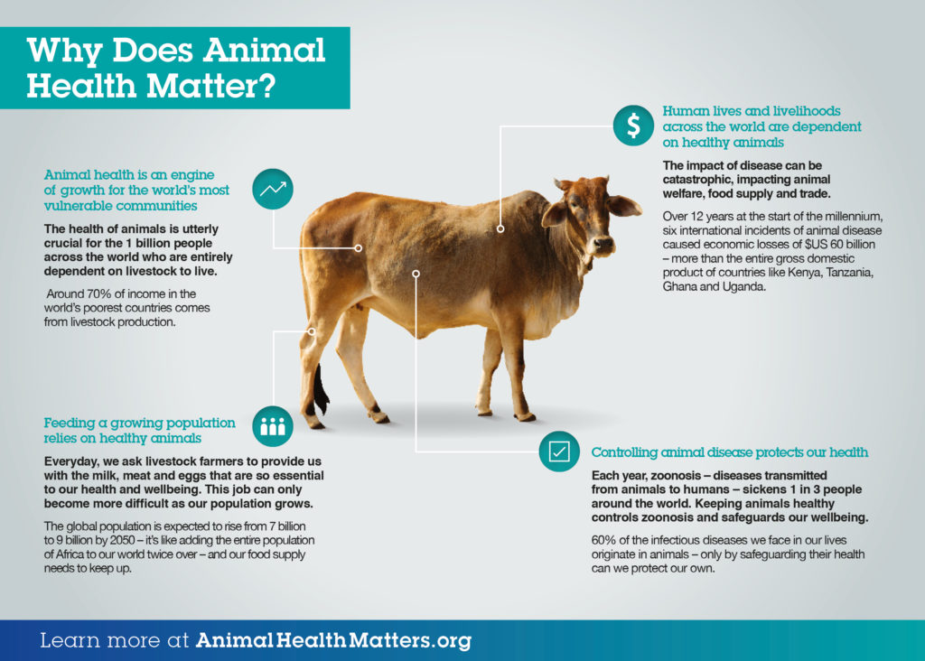 Infographic Why does animal health matter?